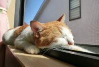 猫が安心して暮らせる住まいとは