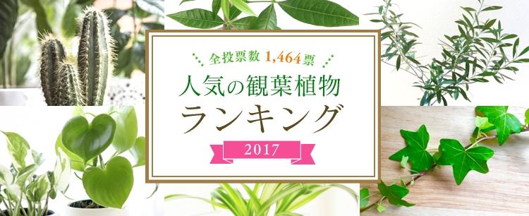 アイリスオーヤマ株式会社が運営する「ガーデニングドットコム」で実施された人気の観葉植物ランキング