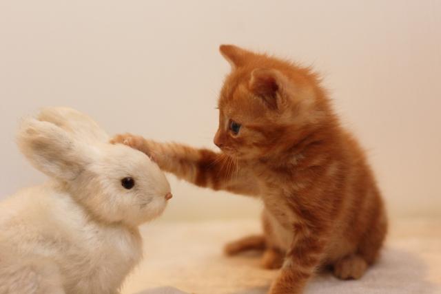 ぬいぐるみで遊ぶ子猫