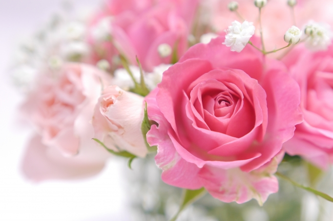 バラと育てやすい花でガーデニングをしよう