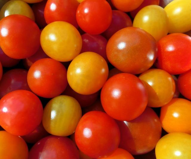 ベランダ菜園トマト