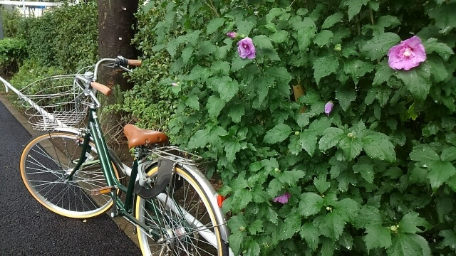 雨の中の自転車