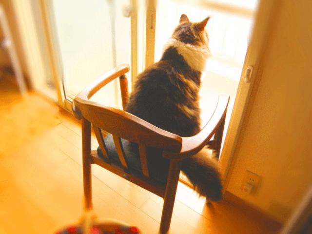 椅子の上に後ろ向きの猫