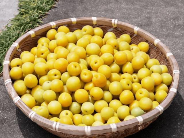黄色い梅の実