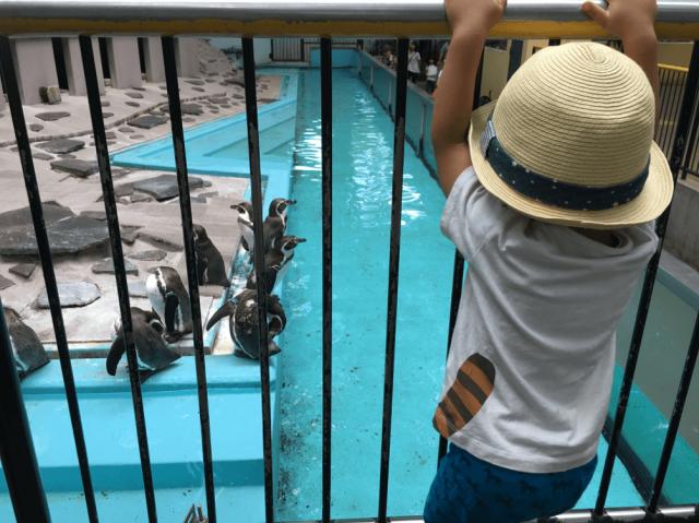 ペンギンを上から見る息子