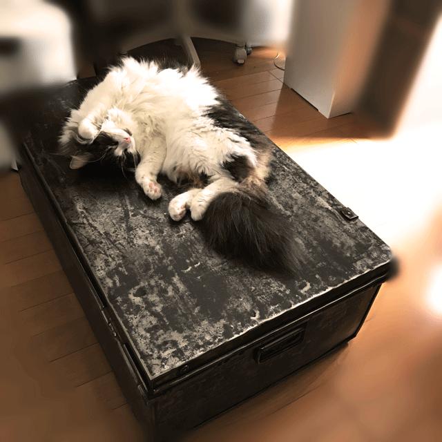 猫とトランク