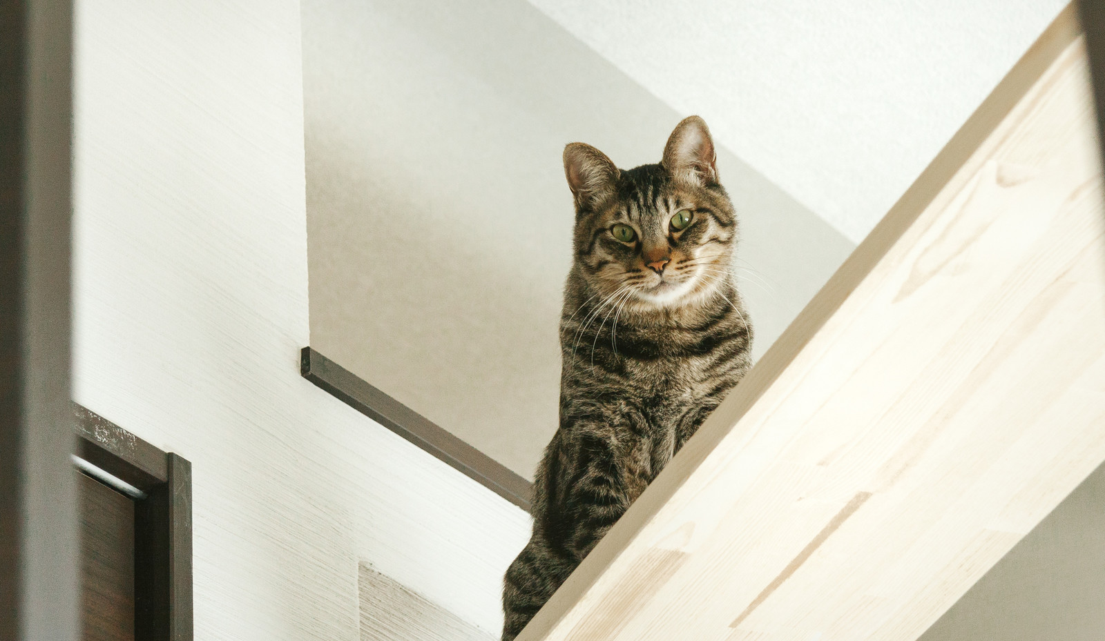 キャットウォークから見下ろす猫