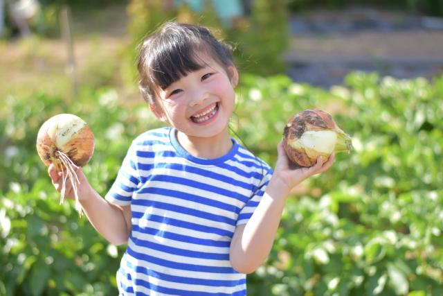 野菜を収穫する子ども
