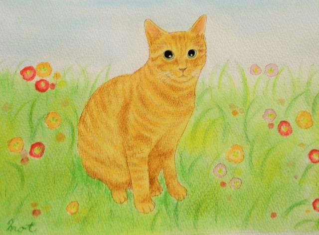 花畑のトラ猫