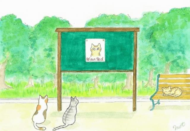 掲示板を見上げる猫