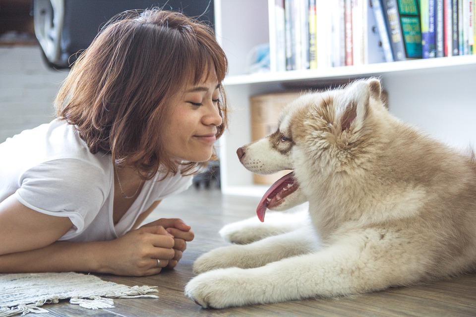 笑顔の女性とハスキーの子犬