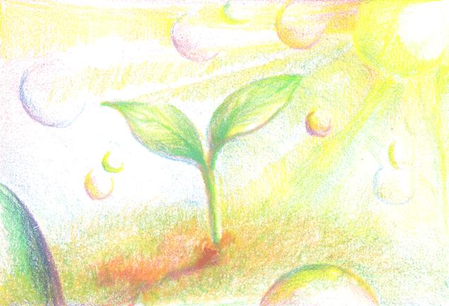 土から顔を出した新芽