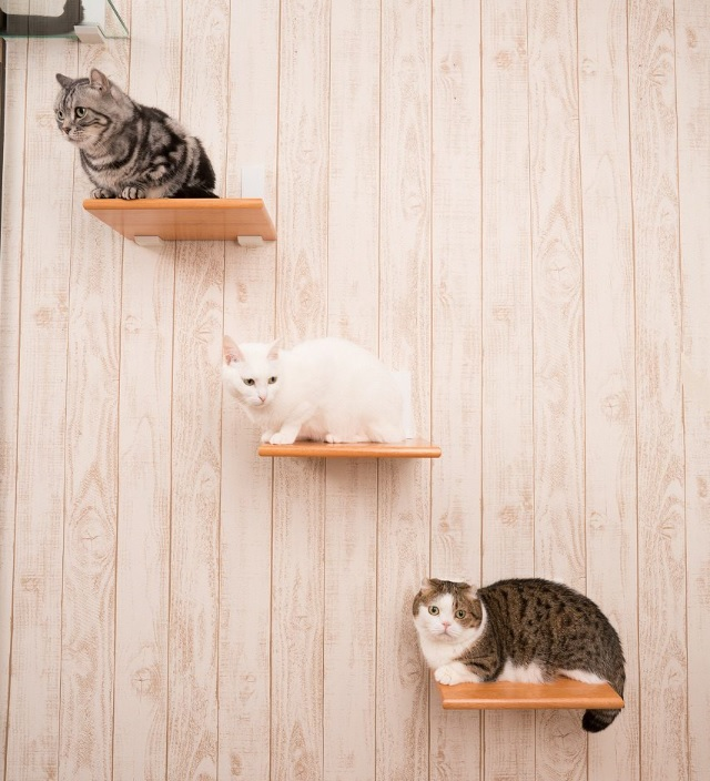 キャットウォークの上の猫たち