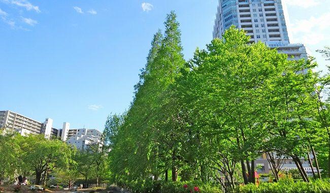 緑も多い高層マンション