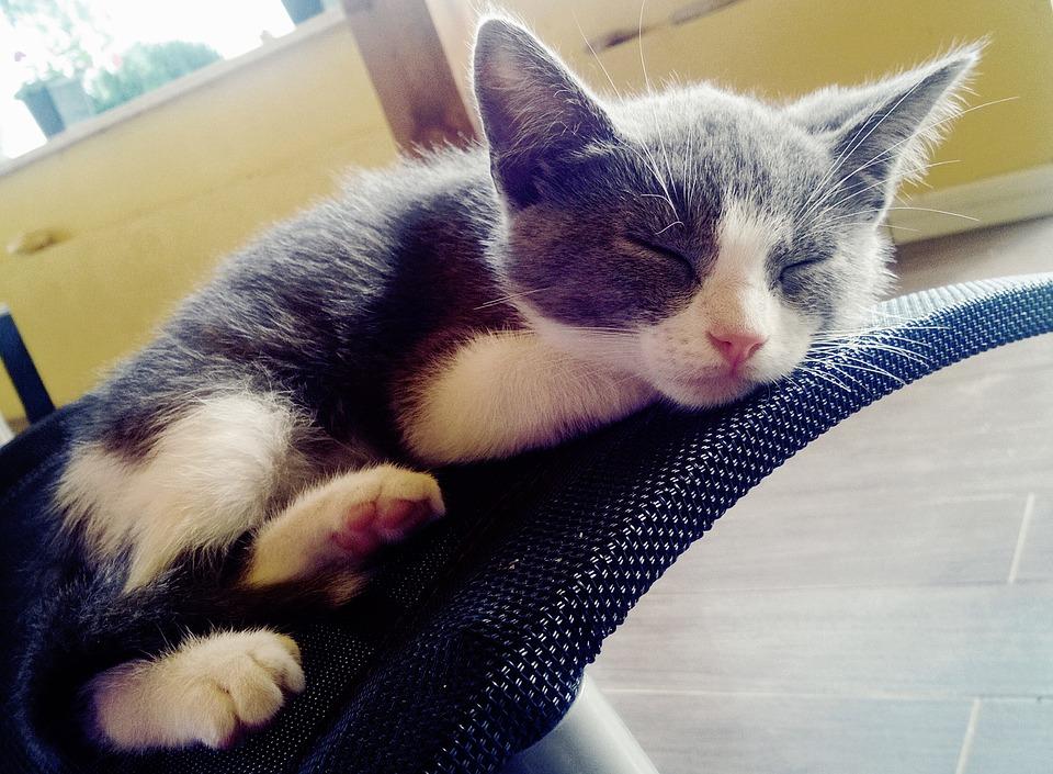 寝顔がかわいい子猫