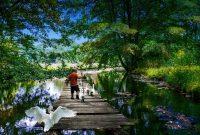 川のある公園で野鳥と遊ぶ子ども