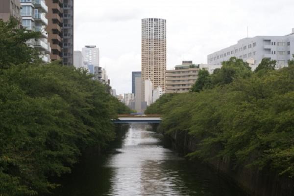 緑が生える目黒川