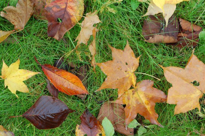 木の葉と芝生
