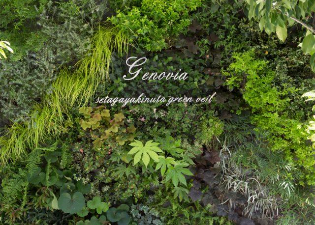 壁面緑化をイメージした美しい緑