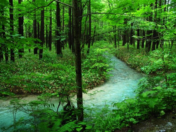 森林浴ができる上高地の森