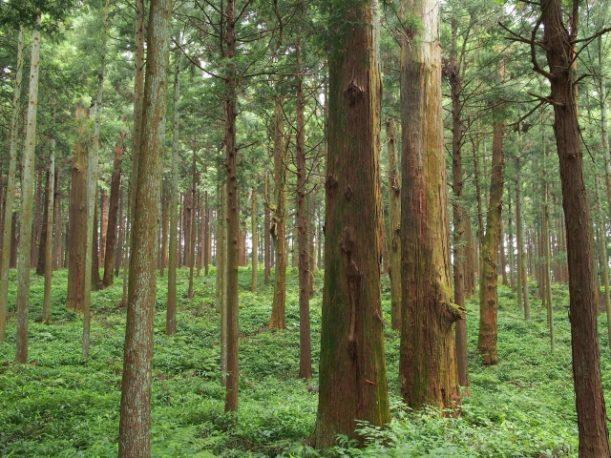 豊かな森林の風景